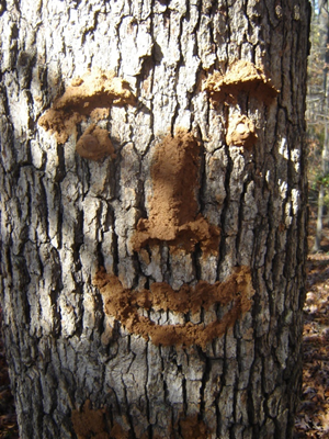 Clay Face on Friend Tree