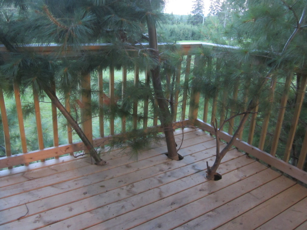 Branches poking out of the deck of the treehouse