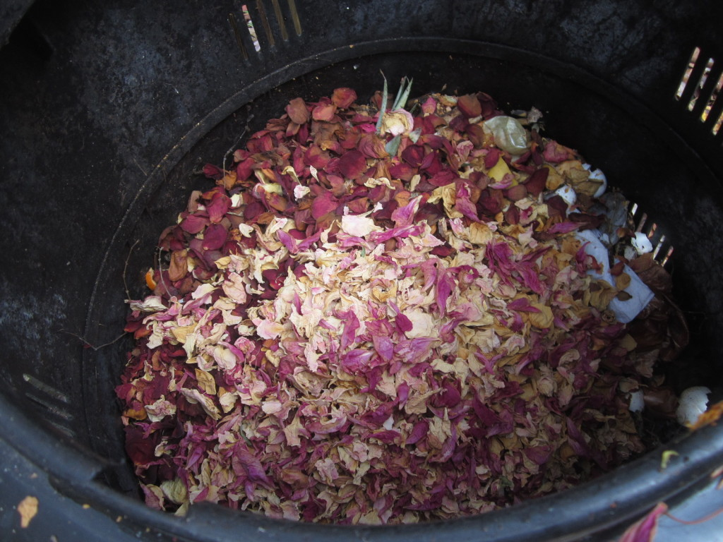 Rose petals in my composter