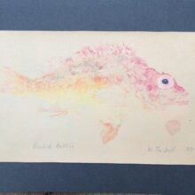 Gyotaku or fish printing of a rosebud rockfish by William Twibell, 1987