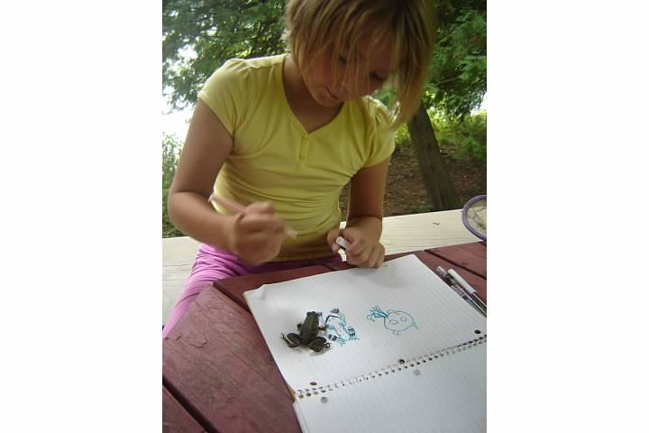 Nora draws a frog with a live frog model, August 2011