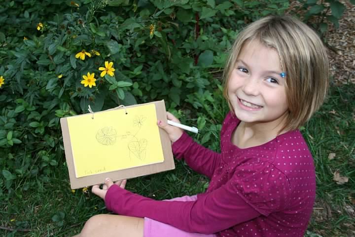 Nora draws tickseed outside, September 2011