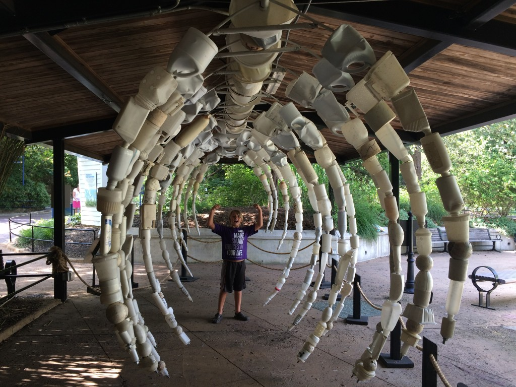 Whale Skeleton from Washed Ashore Exhibit, Smithsonian National Zoo