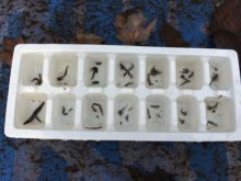 Macro-invertebrates found at Sugarland Run in Herndon, Virginia