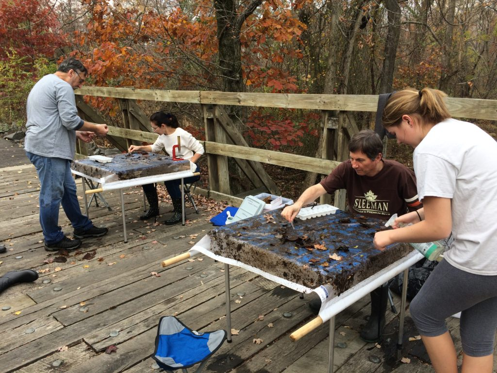 Counting macroinvertebrates at Sugarland Run with the Oakbrook Stewards of Creation