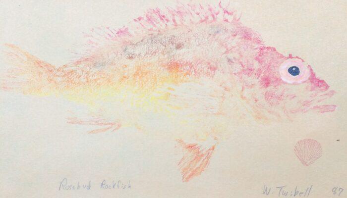 Gyotaku or fish printing of a rosebud rockfish by William Twibell, 1987